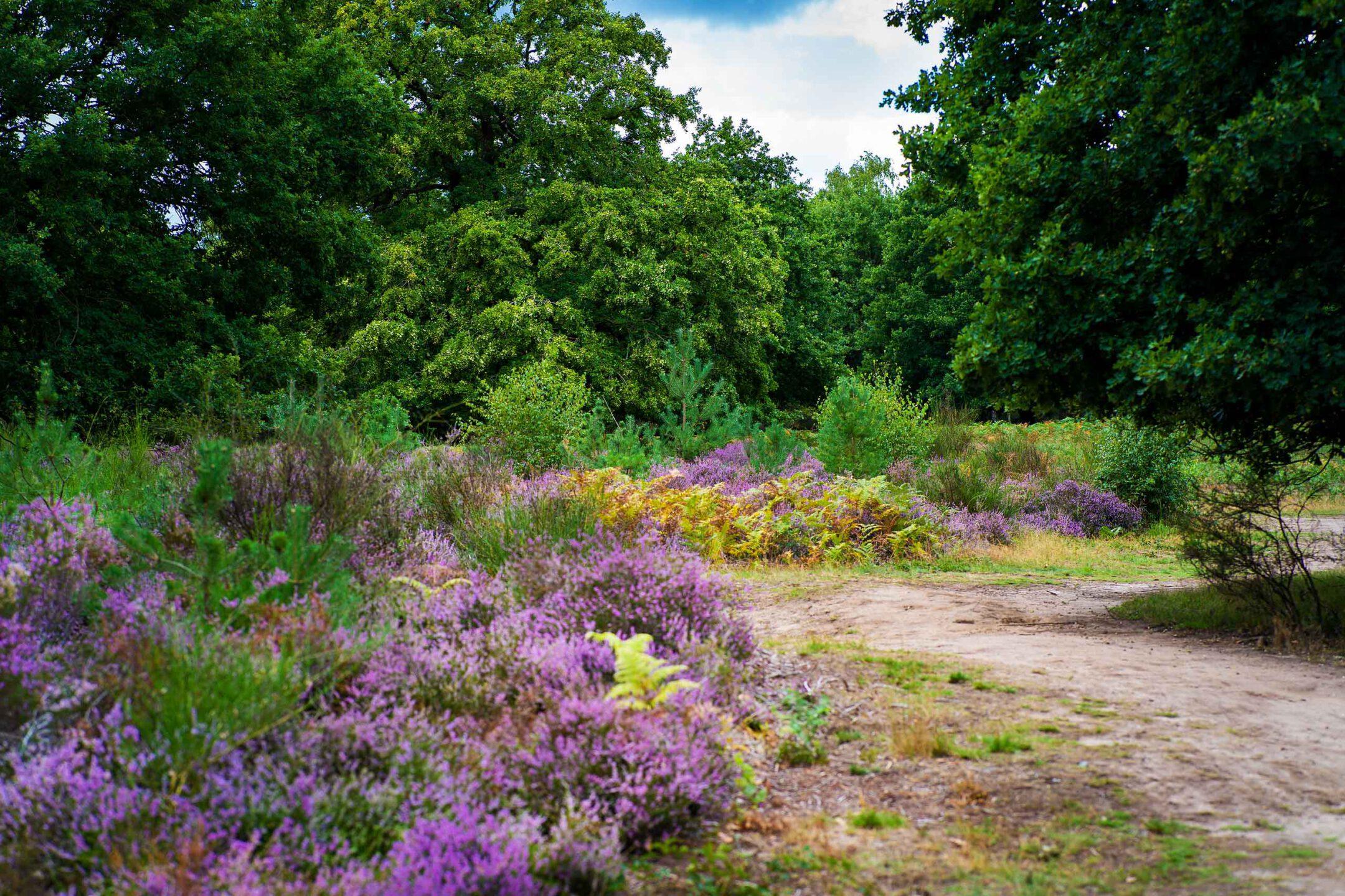 Outdoor Heide